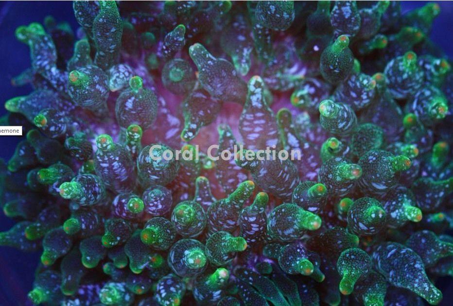 acid rain bubble tip.jpg