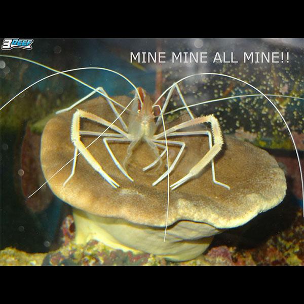 crab-meme.jpg