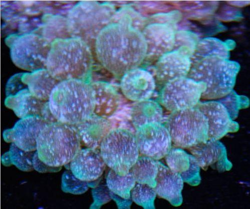green ice bubble tip.jpg