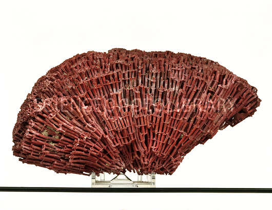 Pipe Organ Coral skeleton.jpg