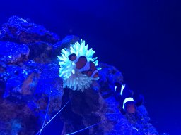 Best Radion G4 setting for LPS tank | 3reef Aquarium Forums