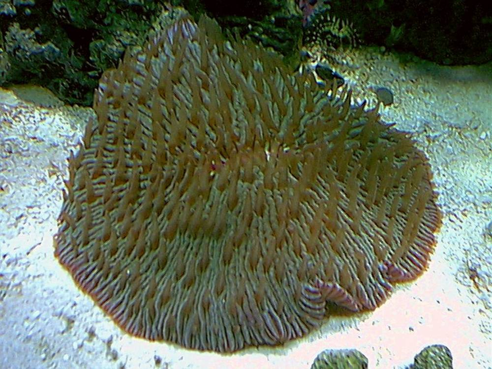 plate_coral2