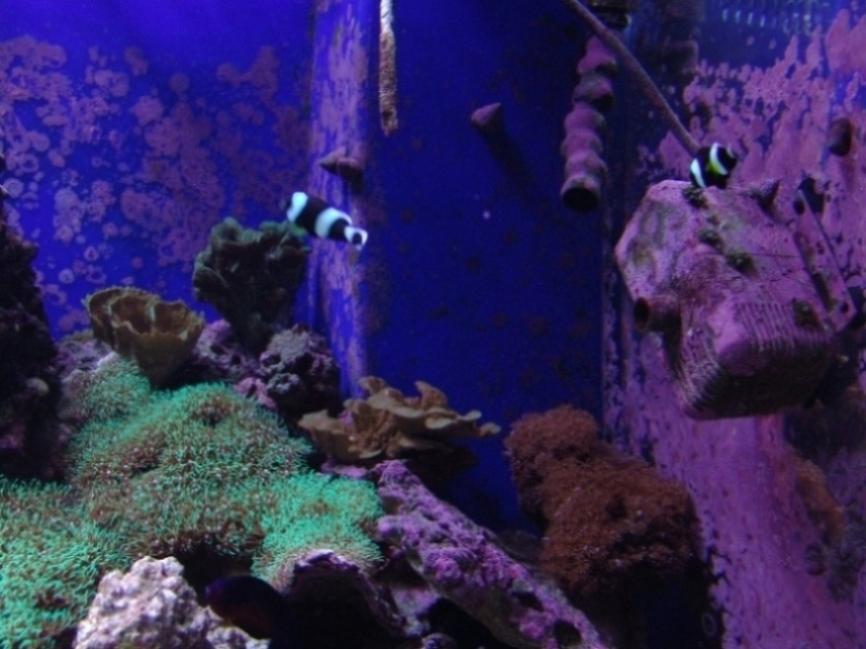 corals3