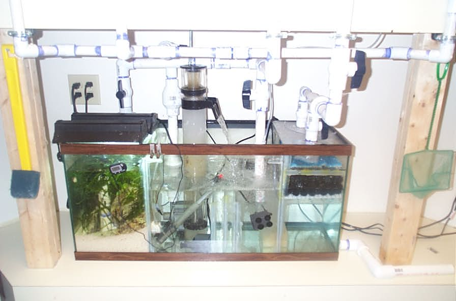 55 gallon sump with fuge