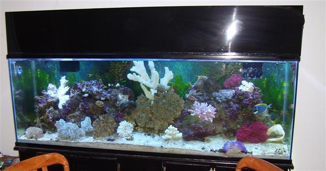 My New 135 gal Reef Setup!!