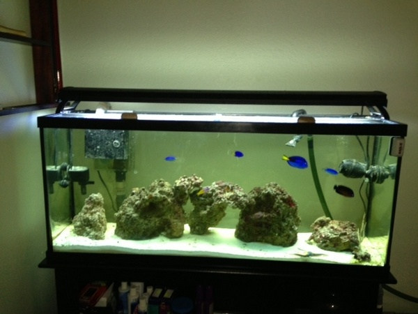 50 gallon glass aquarium 1000 aquarium ideas for 50 gallon fish tank