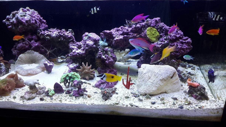 Reef Savvy 100g