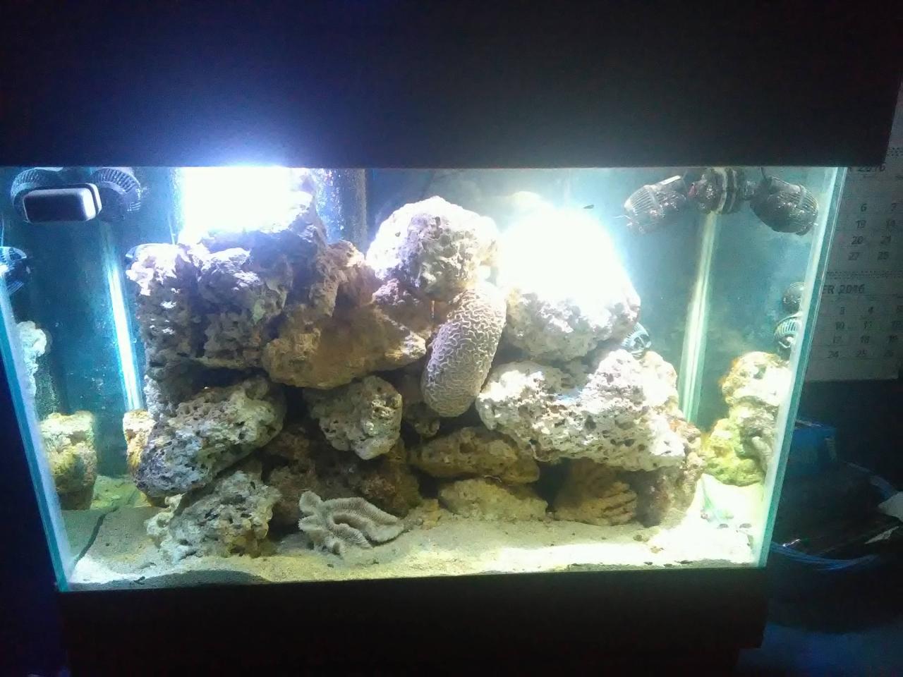 My New Tank
