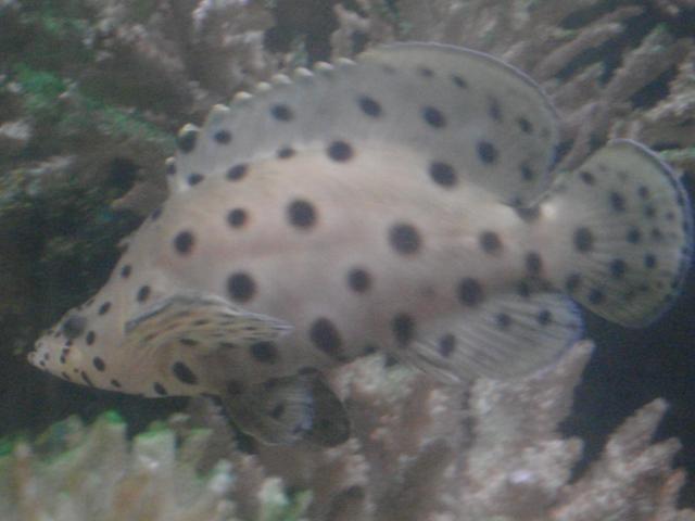 my grouper