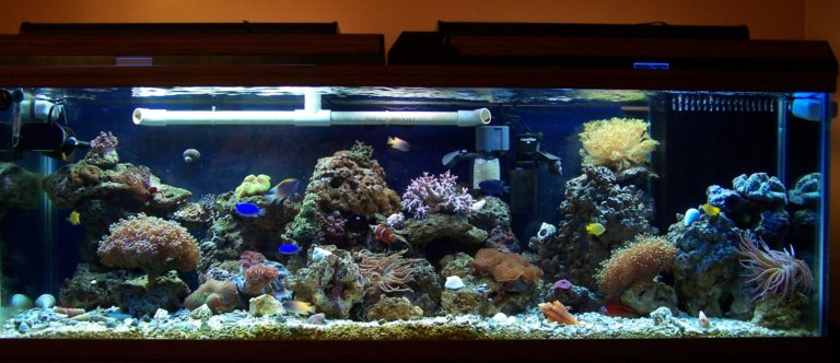 100 Gallon Reef Tank
