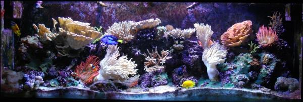 My 150 Reef