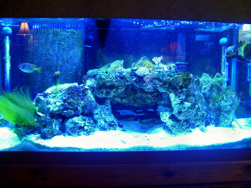 my 75 gallon reef on its way