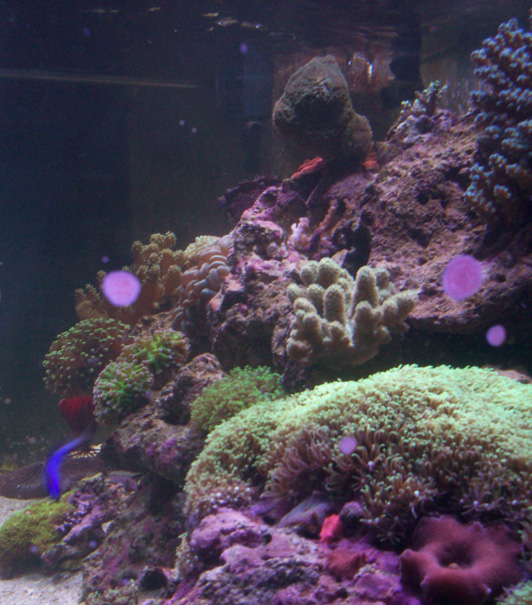 My 75 gallon Reef
