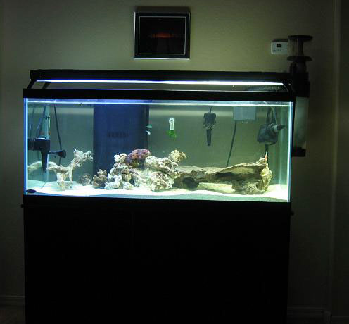 5 gallon fish tank 75 75 gallon tanganyikan cichlid Thirty gallon fish tank