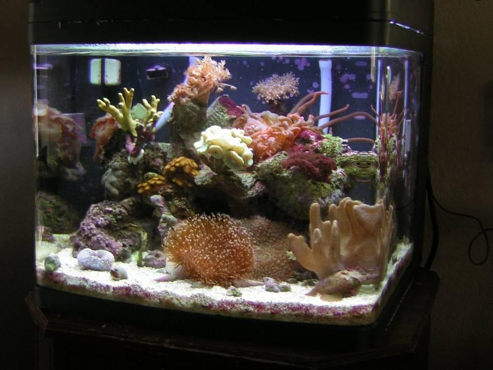 oceanic bio-cube 24gal.