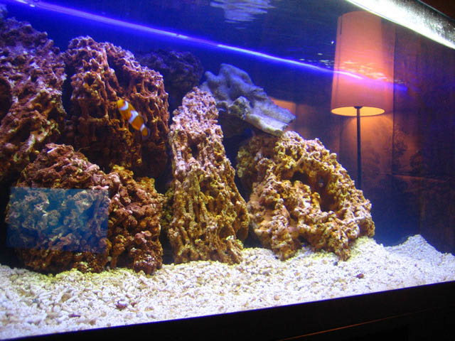 Our 75g fish and reef tank / Nov 2007