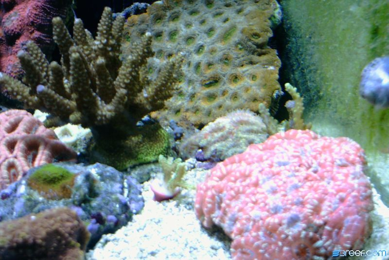 Collection of Acans