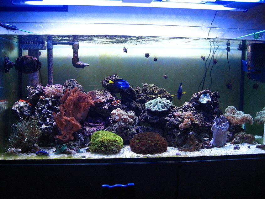 Gianni's Reef