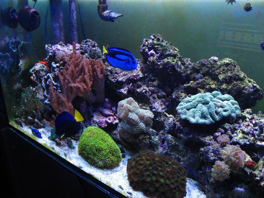 Gianni's Reef2