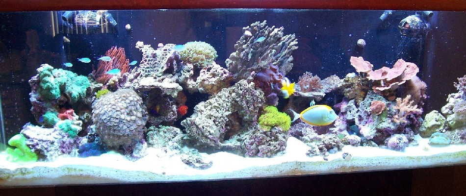Cropped 135 gallon reef pic