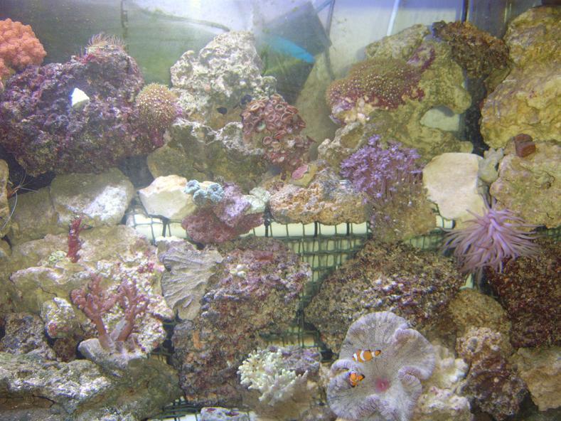 a_few_corals