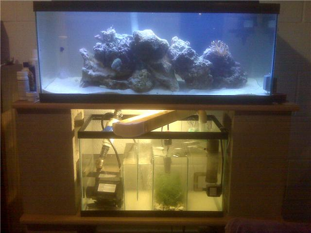 20g long with 10g sump/refugium!!!