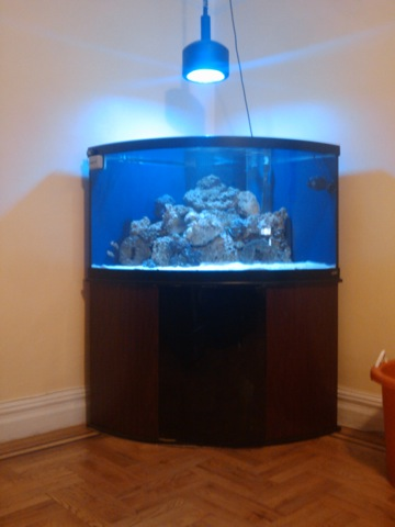 Photo Quot This Is My 92 Gallon Corner Bow Front Quot In The