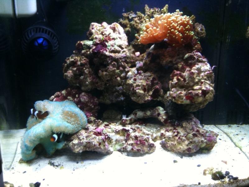 Becca's Reef