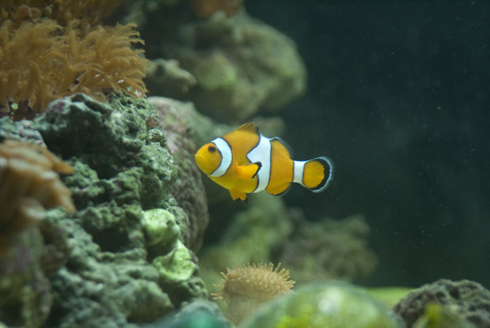 clownfishy