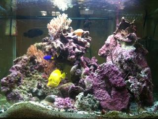 strega168 first sw aquarium
