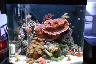 Mix Reef 12g Nano