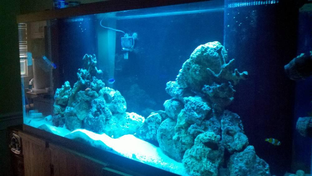Mac's 1st reef 150g