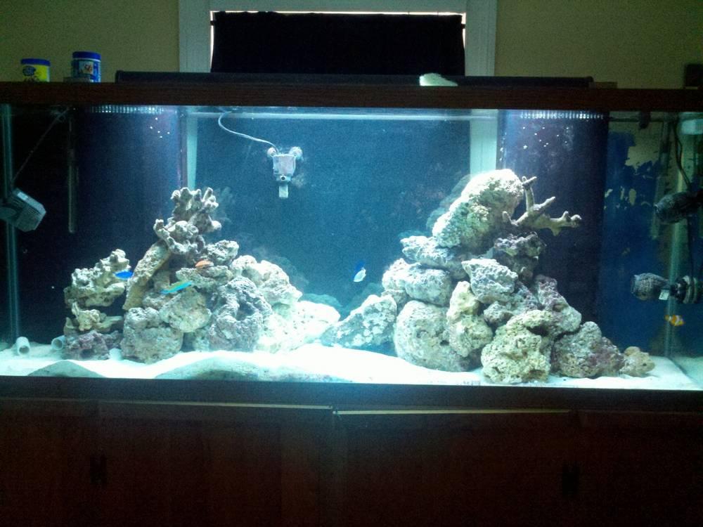 Mac's 1st reef 150g 6 months