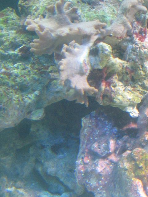 aquarium_2011_097
