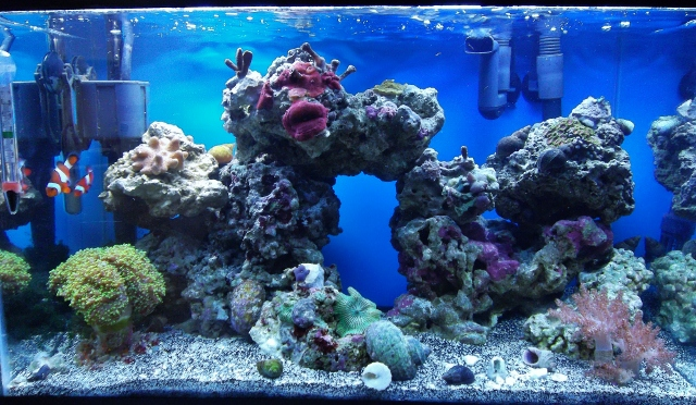 My 10 gallon Nano reef