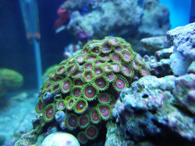 My Favorite zoos in my reef!