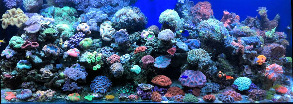 Hamilton Technology - 120 Gallon Reef Aquarium