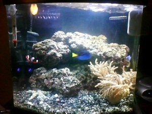 My Reef Aquarium