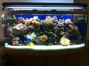 80 Gallon Bowfront