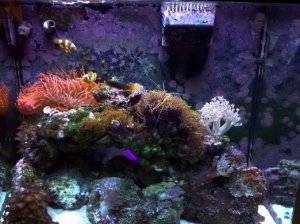 40g Red Sea Max Salter Water