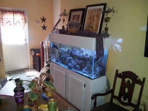 Our tank in the dinning room