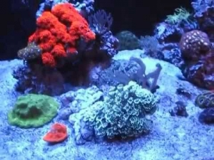 300DD reef 5-27-14