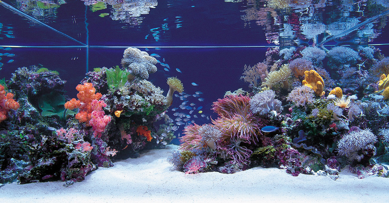 Your pets online 1 way for your saltwater aquarium setup for Saltwater reef fish