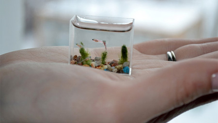 http://www.3reef.com/images/misc/smallest_aquarium.jpg