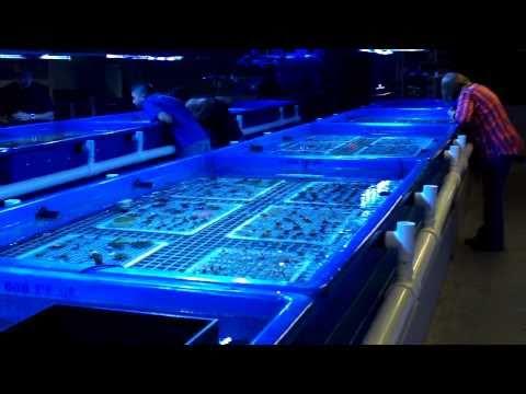 coralcorral.jpg
